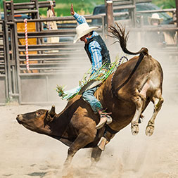 The Greatest Outdoor Show on Earth offers thrills and a world-class rodeo.