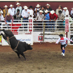 7 Day Calgary Stampede