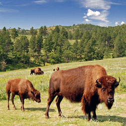 Tour the Black Hills of South Dakota exploring Mt. Rushmore, Crazy Horse & more
