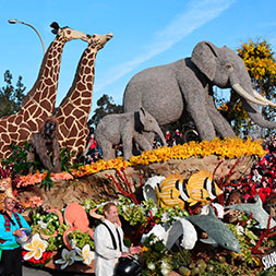 7 Day Rose Parade (07URPP-122820)
