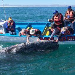 13 Day Baja Whale Watching (13MWWF-030920)