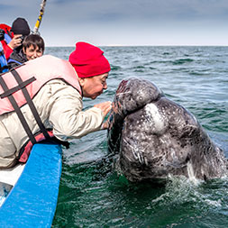 Meet grey whales in the warm waters of Guerrero Negro.
