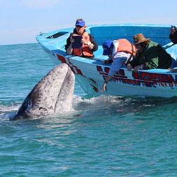 15 Day Baja Whale Watching