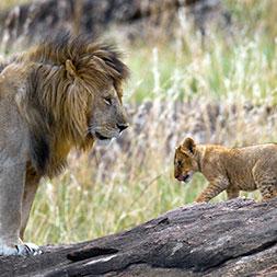 33 Day South Africa RV Safari (33OSAF-021521)