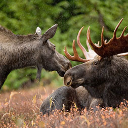 50 Day Grand Alaska