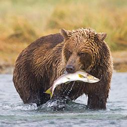 60 Day Premier Alaska (60APAG-071821)