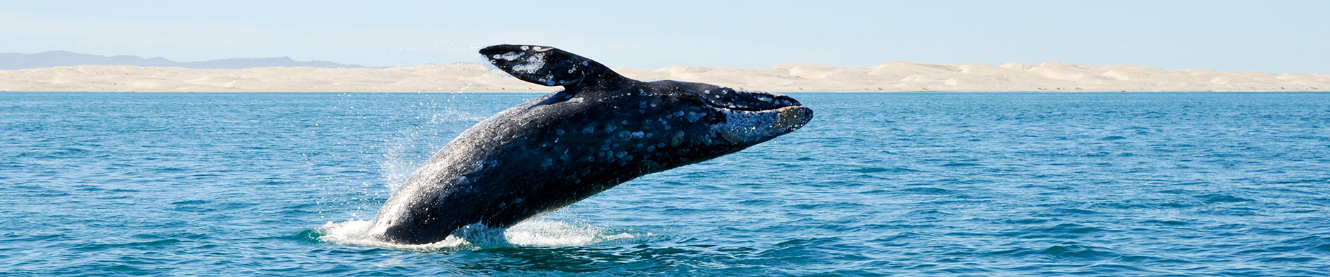 Fantasy RV Tours: 15 Day Baja Whale Watching (15MWWP-022822)