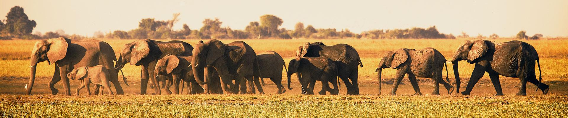Fantasy RV Tours: 33 Day South Africa RV Safari (33OSAP-021422)