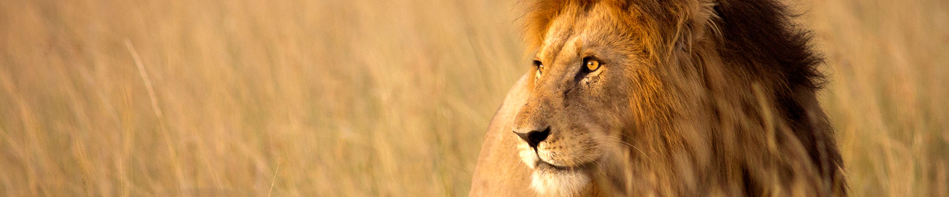 Fantasy RV Tours: 33 Day South Africa RV Safari (33OSAF-021521)